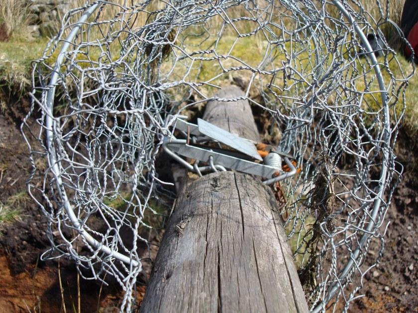 Rodent trap - Langbar Moor nr Ilkley - CREASEY.JPG